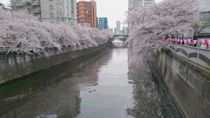 DSC_0606 20170410 目黒川桜